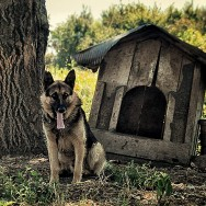 Doggie and his kennel :D