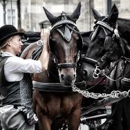 Poor horses :\