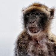 Stoic monkey