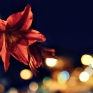 Flower and Night Lights