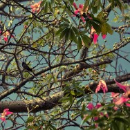 Tree, flowers and bird