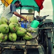Coconut peddler